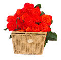 Bouquet of fresh orange roses with basket isolated on white background Stock Photos