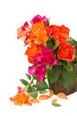 Bouquet of fresh pink and orange roses isolated on white background Stock Images
