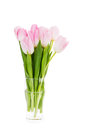 Bouquet of fresh pink tulips in vase isolated over white Royalty Free Stock Photo