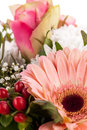 Bouquet of fresh pink and white flowers with a gerbera daisy dahlia roses in a close up view as a background for celebrating Royalty Free Stock Photos