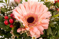 Bouquet of fresh pink and white flowers with a gerbera daisy dahlia roses in a close up view as a background for celebrating Royalty Free Stock Images