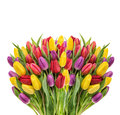Bouquet of fresh spring tulips. Colorful flowers water drops Royalty Free Stock Photo