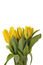 Bouquet of fresh yellow tulips in glass vase Royalty Free Stock Photos