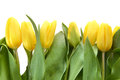 Bouquet of fresh yellow tulips in vase Royalty Free Stock Images