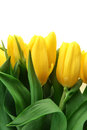 Bouquet of fresh yellow tulips in vase Royalty Free Stock Photos