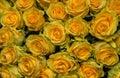 Bouquet Of Freshly Cut Large Y...