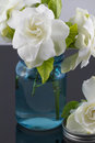 Bouquet of Gardenias Royalty Free Stock Photo