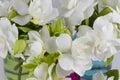 Bouquet of Gardenias Royalty Free Stock Photo