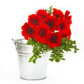 Bouquet of gerbera flowers in a bucket Royalty Free Stock Photos