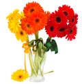 Bouquet of gerbera flowers in vase isolated on white background Royalty Free Stock Image