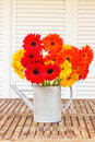 Bouquet of gerbera flowers on wooden table in watering can garden Royalty Free Stock Photo
