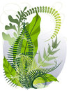A bouquet of herbs and ferns Royalty Free Stock Image