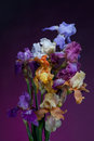 Bouquet of  iris flowers Royalty Free Stock Images