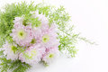 Bouquet of light pink daisy Stock Image