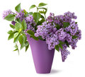 Bouquet of lilac flower Royalty Free Stock Image