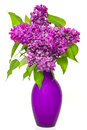 Bouquet of lilac flowers in vase Stock Photography