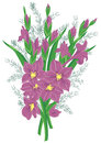 Bouquet of lilac gladioluses Stock Photos