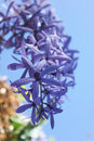 Bouquet of lilac violet flower Royalty Free Stock Photo