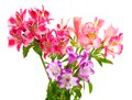 Bouquet of lilies (alstroemeria) Stock Photo