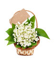 Bouquet of lilies of the valley in a basket with card isolated Royalty Free Stock Photos
