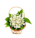 Bouquet of lilies of the valley in the basket isolated Royalty Free Stock Photo