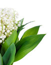 Bouquet of lilies of the valley isolated Royalty Free Stock Photos