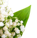 Bouquet of lilies of the valley isolated Stock Photo