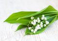Bouquet lilies of the valley on a wooden background Stock Photography