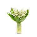 Bouquet of lily of the valley on white background Royalty Free Stock Photo