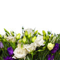 Bouquet of lisianthus flowers on  white Stock Images