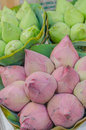 Bouquet lotus sell at the fresh food market in the morning for buddhist worship Stock Image