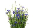 Bouquet of many beautiful cornflowers flowers isolated on white Royalty Free Stock Images