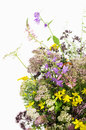 Bouquet of medicinal herbs on a white background Royalty Free Stock Image