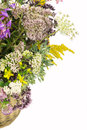 Bouquet of medicinal herbs on a white background Royalty Free Stock Photography