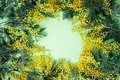 Bouquet of mimosa flowers on green background. International Wom