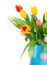 Bouquet of multicolored   tulip flowers in blue pot Royalty Free Stock Photo