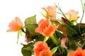 Bouquet of orange roses Royalty Free Stock Photo