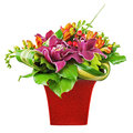 Bouquet from orchids and lilies in red vase isolated on white ba background closeup Royalty Free Stock Photography