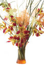 Bouquet of orchids in vase. Isolated Stock Photo
