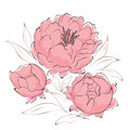 Bouquet of peonies background illustration pink Stock Photos