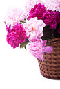 Bouquet of peonies blooms Royalty Free Stock Photo