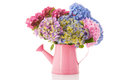Bouquet pink and blue Hydrangea Stock Images