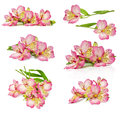 Bouquet of pink flowers Royalty Free Stock Photo