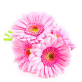 Bouquet pink gerber Royalty Free Stock Photo