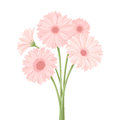 Bouquet of pink gerbera flowers. Vector illustration. Royalty Free Stock Photo