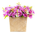 Bouquet of pink orchid in wicker basket isolated on white Royalty Free Stock Images