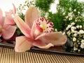 De rosa y blanco flores en bordo