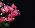 Bouquet of pink roses on black background Stock Image