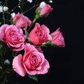 Bouquet of pink roses on black background Royalty Free Stock Photo
