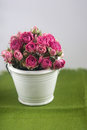 Bouquet of pink roses in a decorative bucket on green background Royalty Free Stock Image